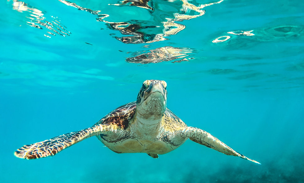 Green Turtles Can Graph
