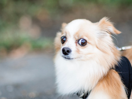 Reactions in Dogs - Part 2