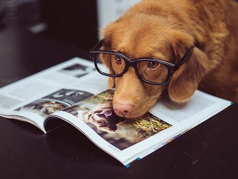 chien portant des lunettes