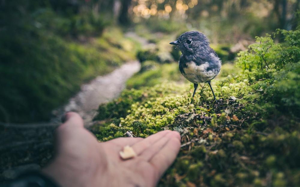 Hand füttert Vogel im Wald