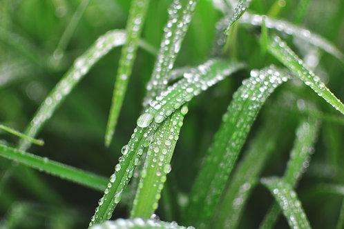 Rain Garden kit
