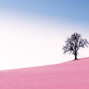 Huizenjacht | Roze wolk