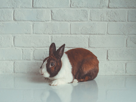 The Reasons Cruelty-Free Products Are So Important