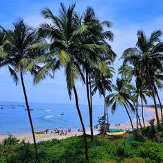 goa palm trees