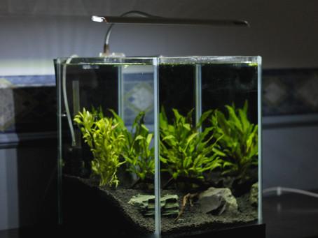 How To Set Up A Freshwater Aquarium