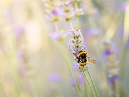 Planting for the Bees