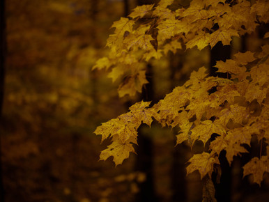 Finding Gratitude in Grief