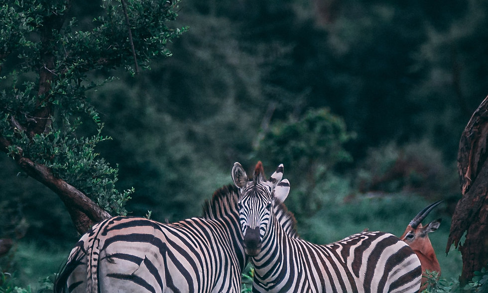 Zebras habitats food chains Science classes online kid grades second third 2 3 homeschool curriculum online programs virtual