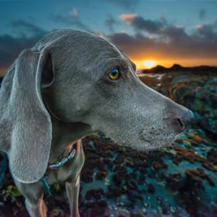 Britain's best dog walks