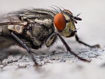 Tips & Tricks: Flies