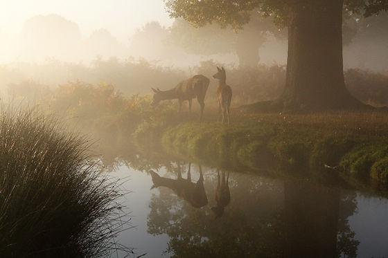 Image by John Royle