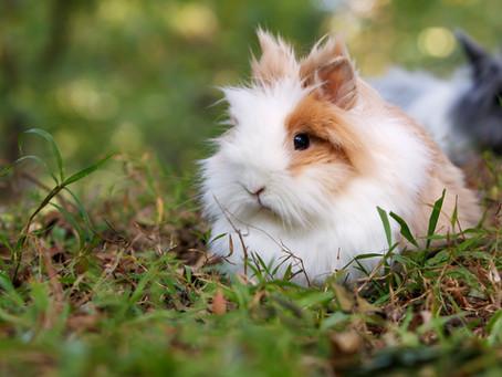 Jenis Jenis Kelinci Hias Lucu yang Bikin Ingin Pelihara