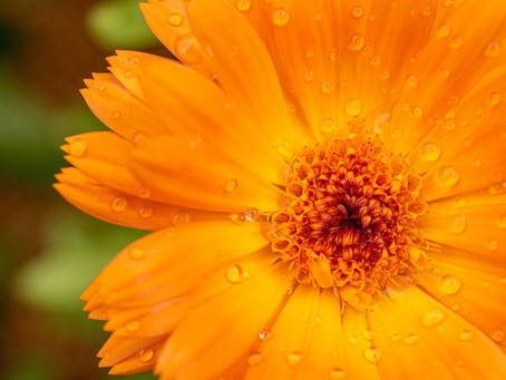 Drenched in Heavenly Dew!
