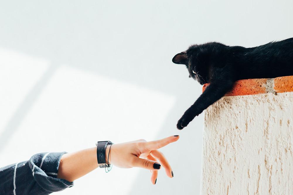 5 Beziehungsarten, die Katzen mit ihren Besitzern eingehen
