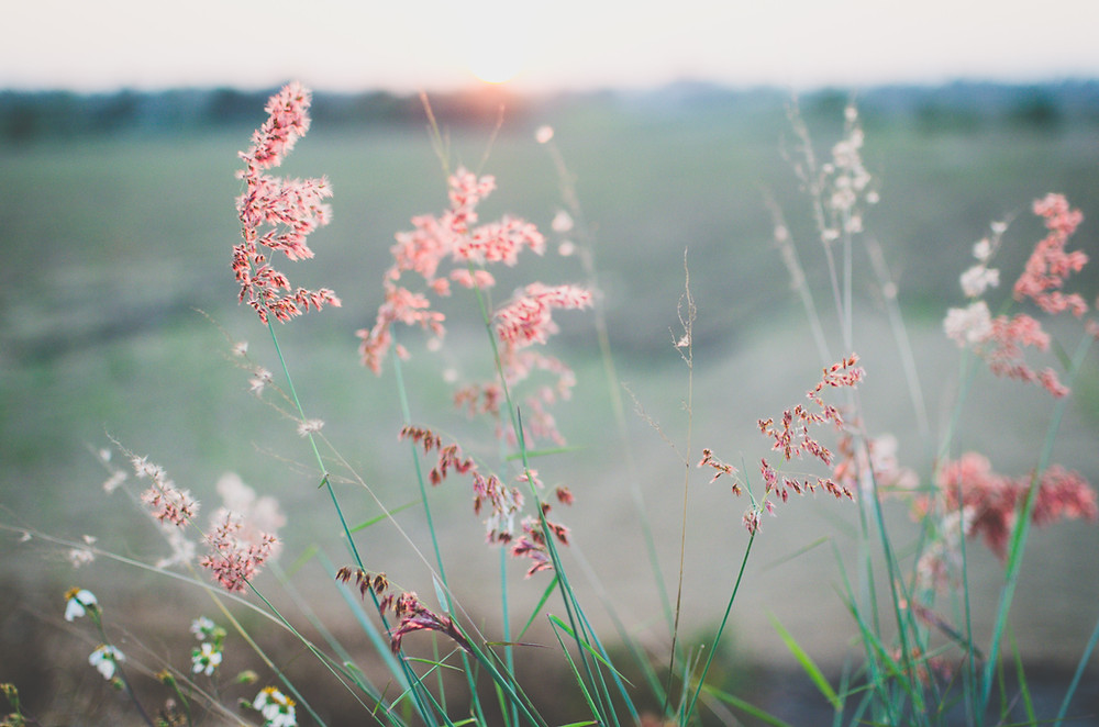 Koti Lifestyle | self-care, flowers in the field, nature, breathe