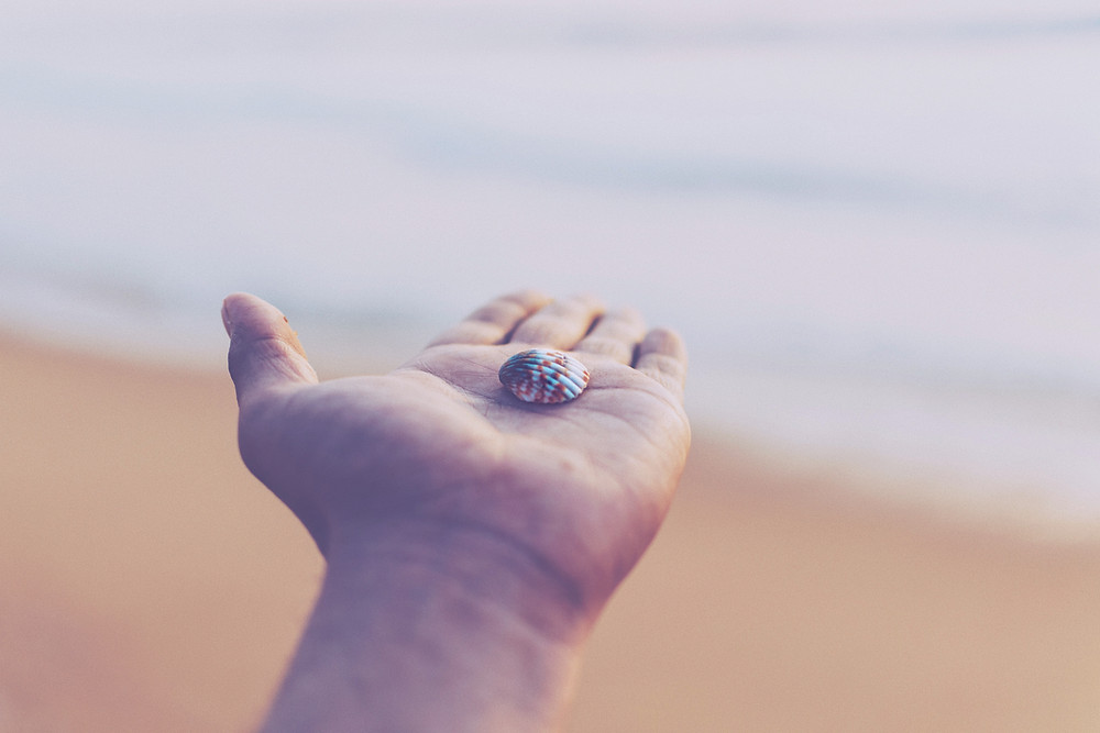 person holding a shell