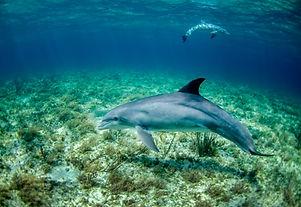 Hurghada Dolphin Trip