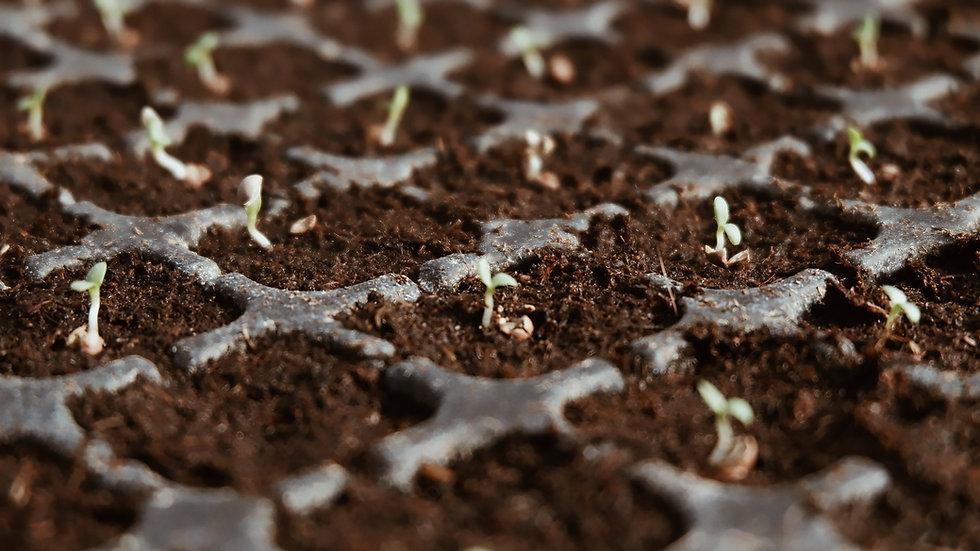 BIOM Premium Seed Rising Mix