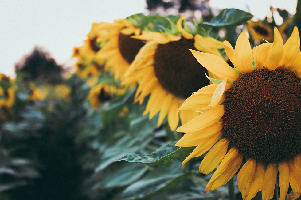 Blog About Home Care Sunflowers