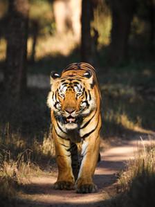 Jungle Safari Tour Packages