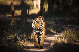Image by Raghav Kabra