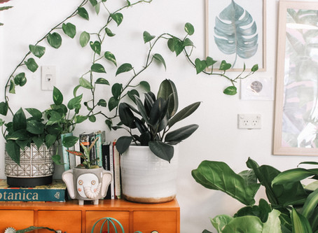 Four ways to purify your home