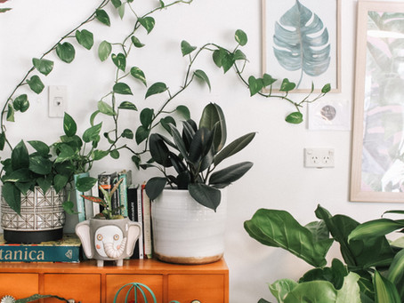 How to choose the right plants for your home.