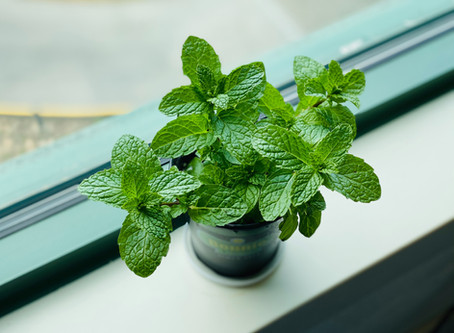 23 ideas to use mint or even more mint