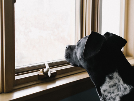 Vancouver vet advice on how to prepare for your dog's potential separation anxiety post-lockdown