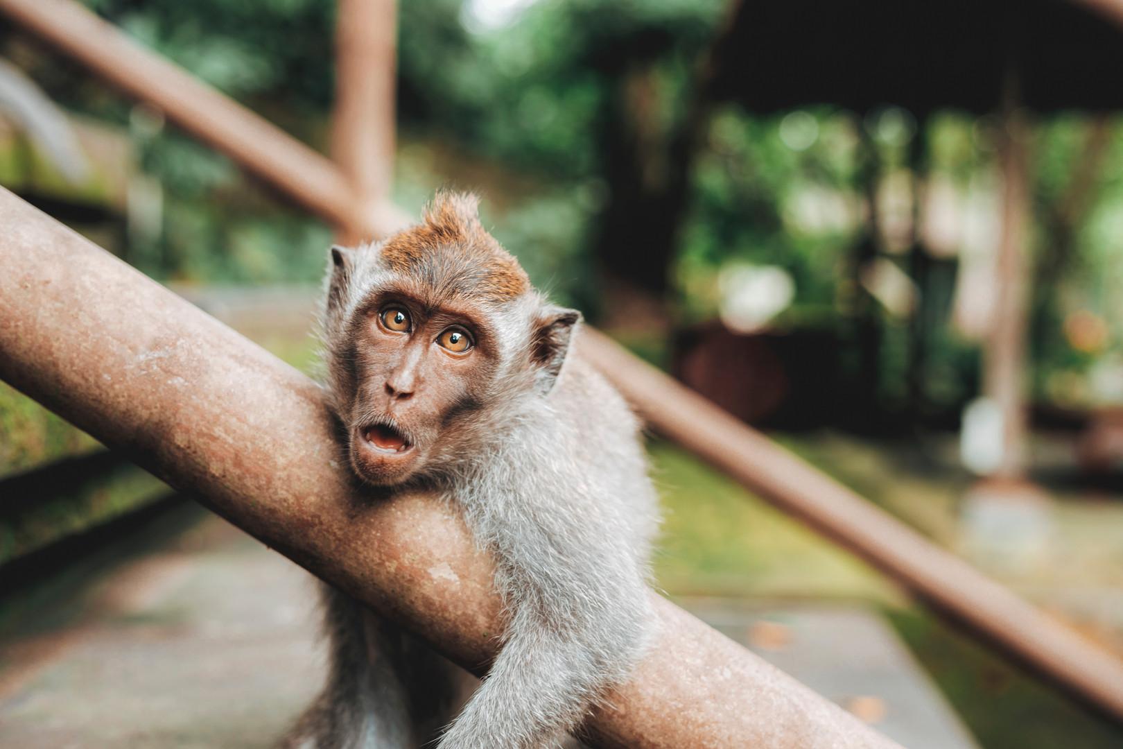 Bali   Image by Jared Rice