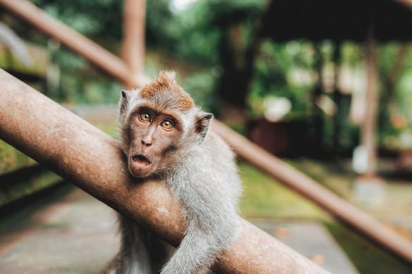 Bali | Image by Jared Rice