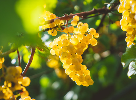 New Zealand Wineries