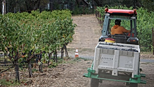 Tractor driving through vineyard