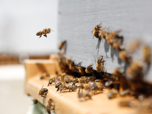 Bee & Hive Removal