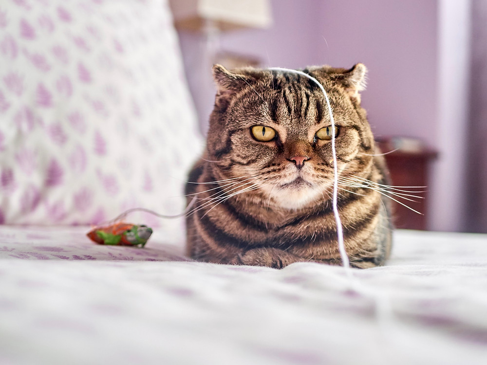 Cuyamaca Animal Hospital's Guide to Environmental Enrichment for Cats | Santee, San Diego veterinarians