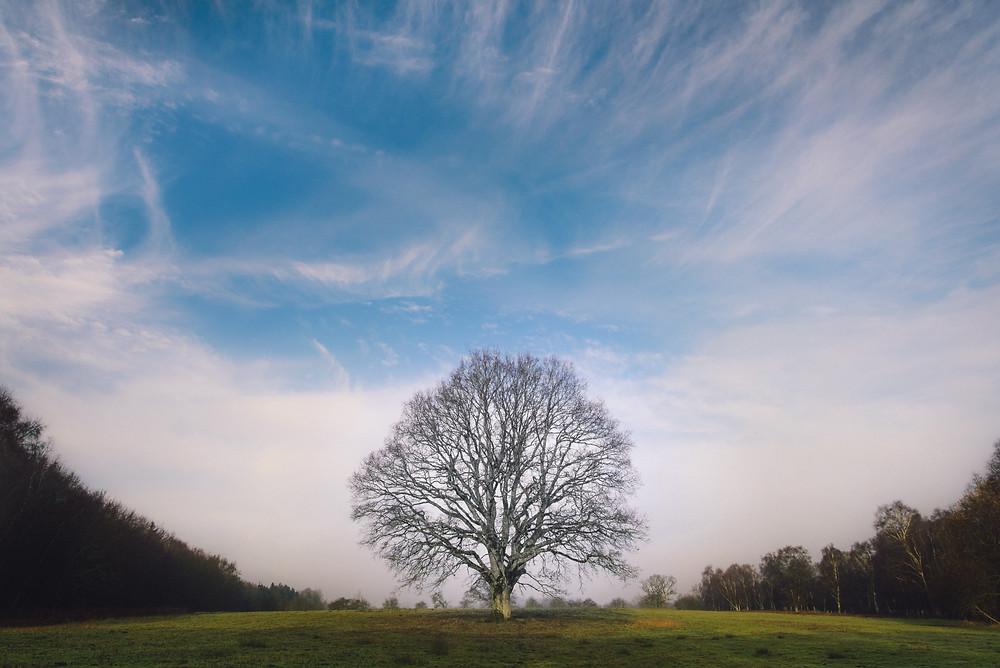 Alleinstehender Baum sucht nach Wärme.