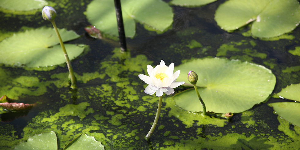 Royal Botanical Gardens Weekend Meet Up