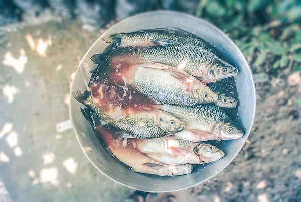Bait bucket full of fish