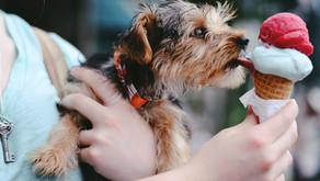 Free feeding versus timed feeding of puppies
