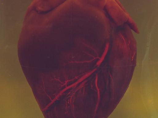 Heart Health & Vascular Disease