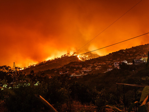 California wildfires claim several marijuana farms, threatening growers with financial losses