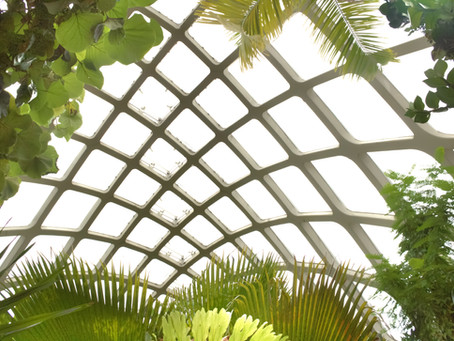 Biophilia: A LOVE FOR ALL THINGS NATURAL