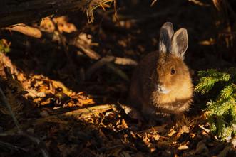 Rabbits help us...