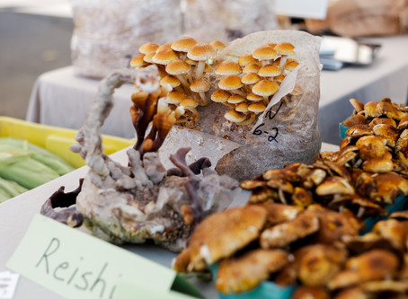 Why our Medicinal Mushrooms are Superior