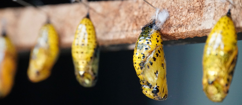 Bursting Forth From Your Chrysalis