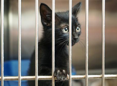 5 ANS DE PRISON POUR TOUT ACTE DE CRUAUTÉ ENVERS UN ANIMAL ET FINIE LA VENTE EN ANIMALERIE : OH YES