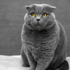 Kedinizi Fırçalarken Dikkat Etmeniz Gerekenler
