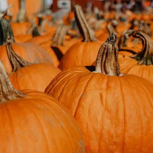 Spice Pumpkin