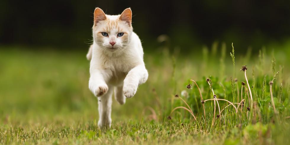 KittySmacker