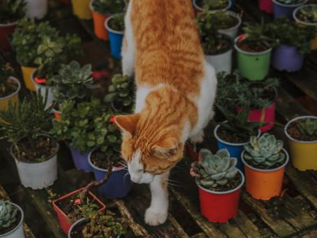 Отровни за котките цветя и растения